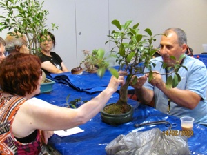 Bonsai tree making classes in bangalore dating 7